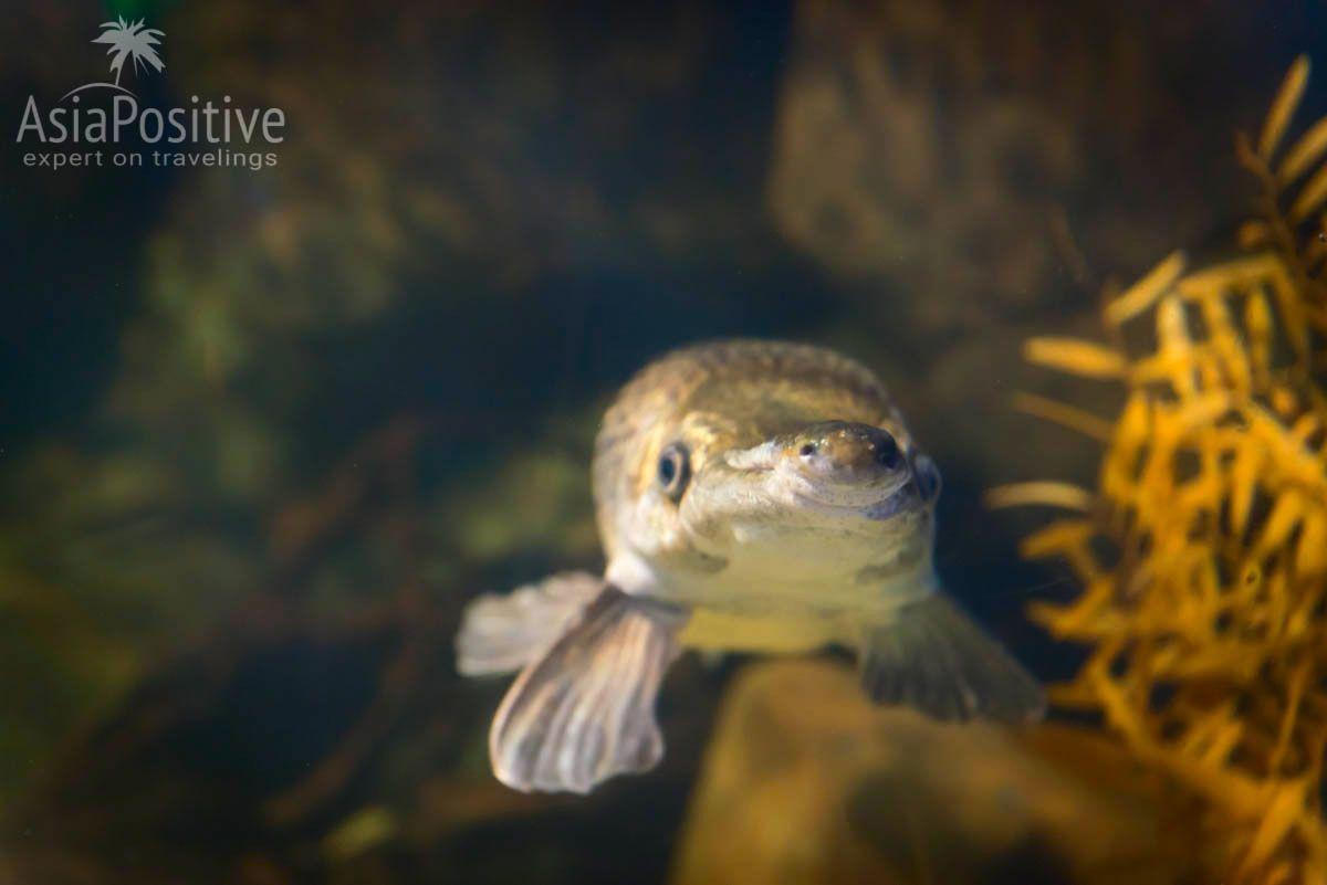 Tropical Garfish с пятачком на носу | Океанариум Подводный мир Лангкави | Малайзия | Путешествия по Азии с AsiaPositive.com