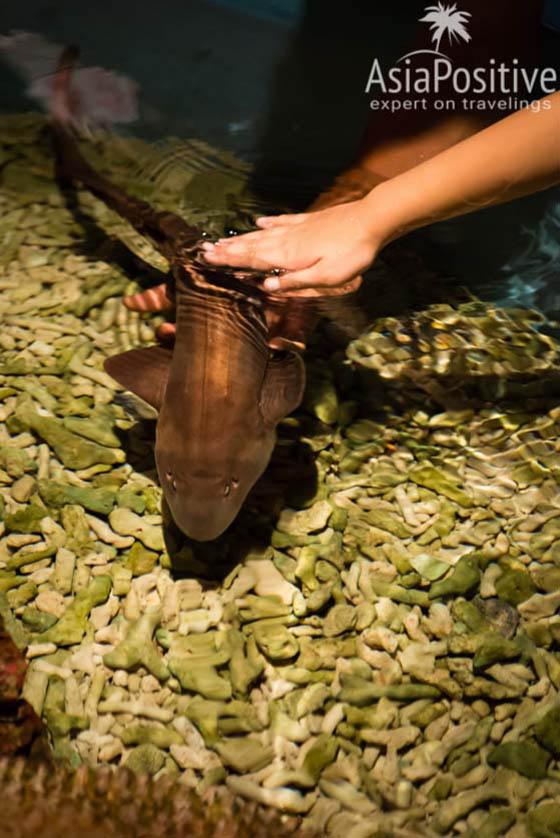 В океанариуме Куала-Лумпура можно потрогать акулу | Подробный план самостоятельной поездки с Пхукета в Сингапур и Куала-Лумпур | Таиланд | Путешествия по Азии с AsiaPositive.com