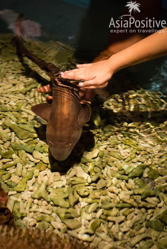 Океанариум Куала-Лумпура - возможность покормить и погладить акулу | С Пхукета в Куала-Лумпур: детальный план поездки | Самостоятельные путешествия AsiaPositive.com