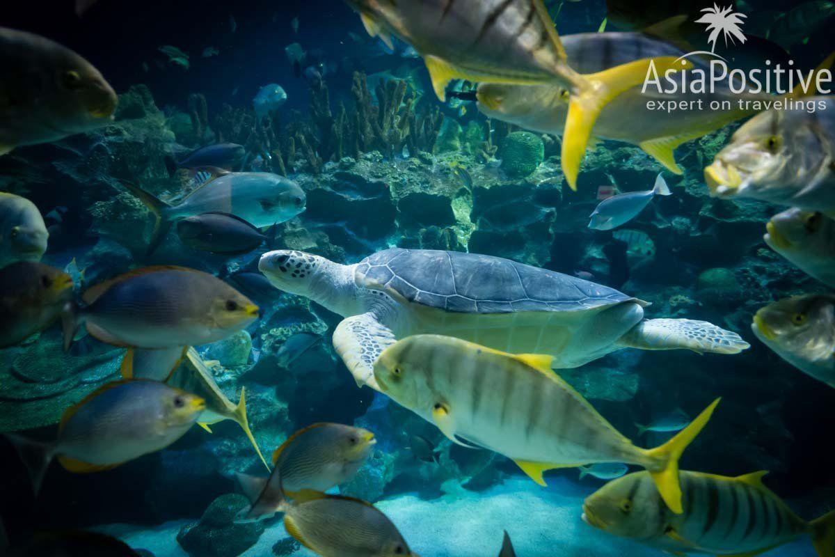 Черепаха в окружении разнообразных рыб | Океанариум Куала Лумпура (Aquaria KLCC) – как получить максимум впечатлений | Эксперт по путешествиям AsiaPositive.com