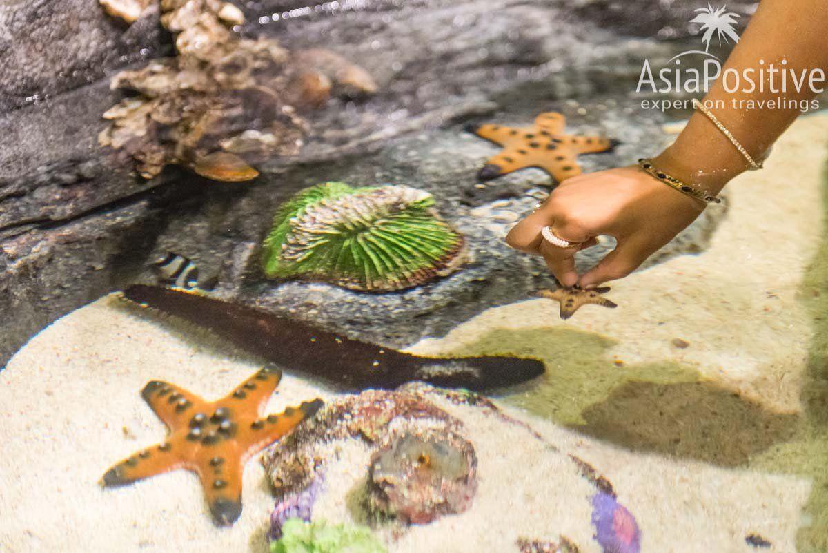 Проверьте сами, какая на ощупь морская звезда, насколько мягок морской огурец или гладкая акула | Океанариум Куала Лумпура (Aquaria KLCC) – как получить максимум впечатлений | Эксперт по путешествиям AsiaPositive.com