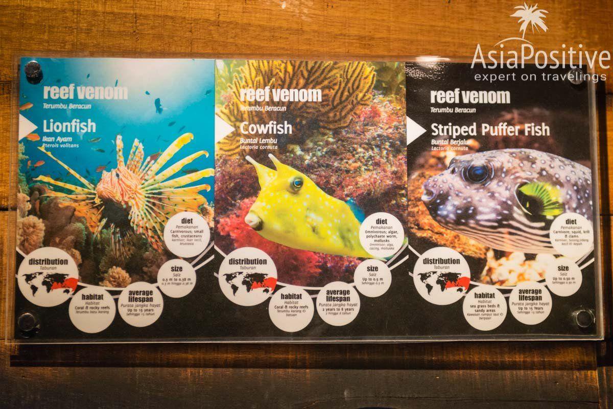 Возле каждого аквариума есть информация о его обитателях | Океанариум Куала Лумпура (Aquaria KLCC) – как получить максимум впечатлений | Эксперт по путешествиям AsiaPositive.com