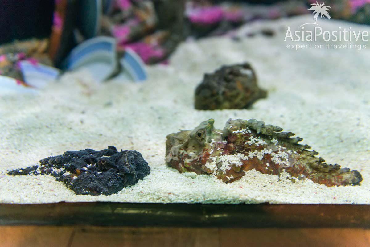 Рыбу-камень невероятно тяжело увидеть - на этом фото их две | Океанариум Куала Лумпура (Aquaria KLCC) – как получить максимум впечатлений | Эксперт по путешествиям AsiaPositive.com