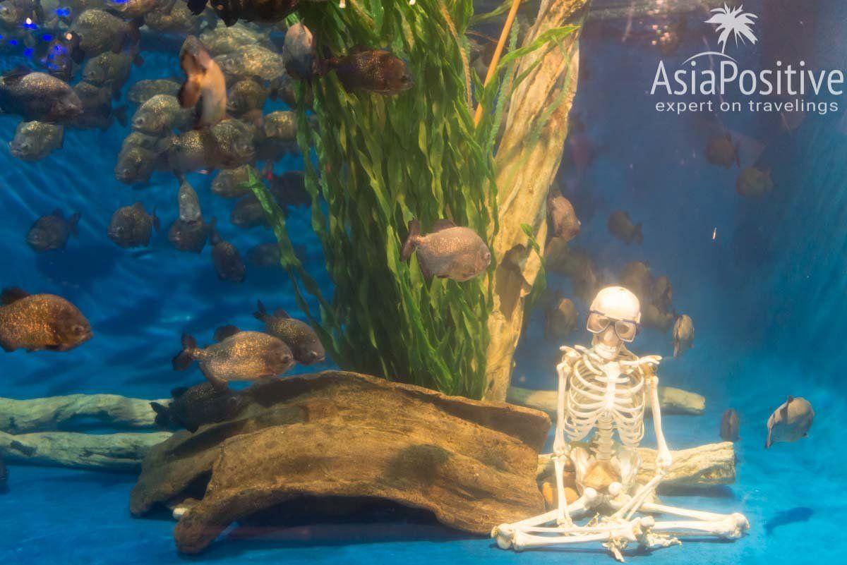 Аквариум с пираньями| Океанариум Куала Лумпура (Aquaria KLCC) – как получить максимум впечатлений | Эксперт по путешествиям AsiaPositive.com