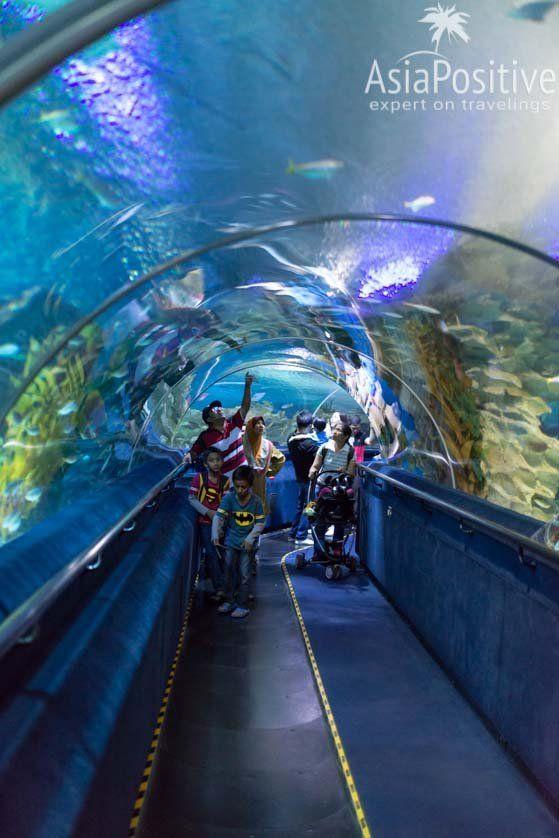 Коридор под огромным аквариумом с акулами, скатами и другими морскими обитателями | Океанариум Куала Лумпура (Aquaria KLCC) – как получить максимум впечатлений | Эксперт по путешествиям AsiaPositive.com