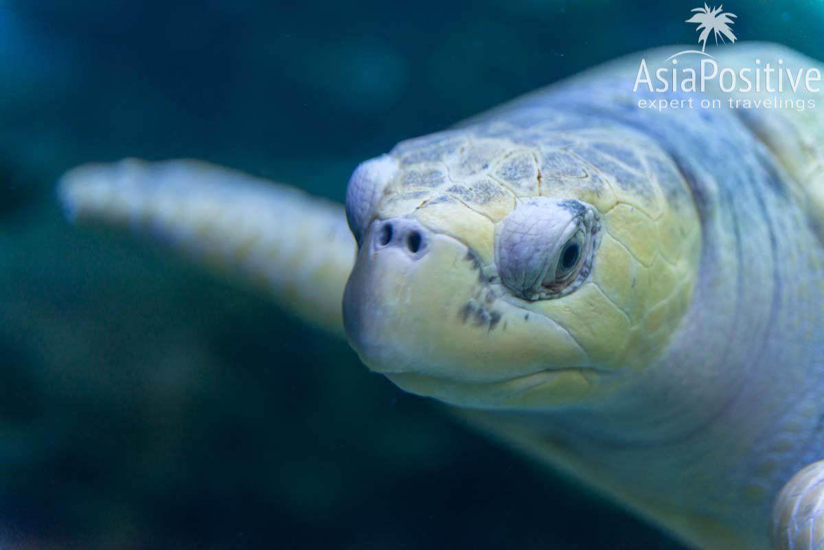 Портрет черепахи| Океанариум Куала Лумпура (Aquaria KLCC) – как получить максимум впечатлений | Эксперт по путешествиям AsiaPositive.com