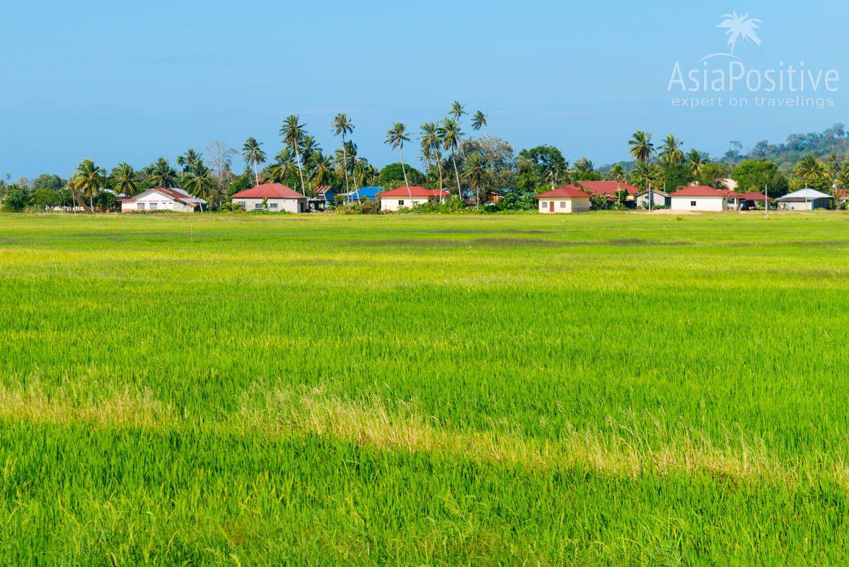 Виды с дороги недалеко от пляжа Тенгах | Транспорт на острове Лангкави | Путешествия по Азии с AsiaPositive.com