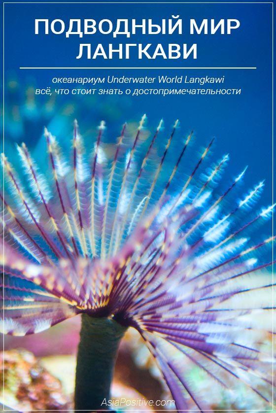 Океанариум Подводный мир Лангкави | Что посмотреть на острове Лангкави | Малайзия с AsiaPositive.com