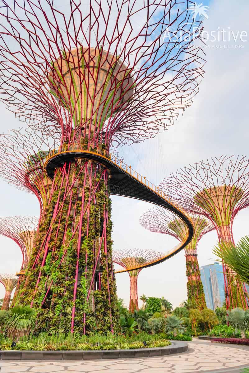 Супер - деревья в Gardens by the Bay | Детальный маршрут по Сингапуру на 2 дня - посетить самые интересные места и посмотреть самые незабываемые достопримечательности Сингапура за 48 часов. | Что посмотреть в Сингапуре за 2 дня | Путешествия по Азии с AsiaPositive.com