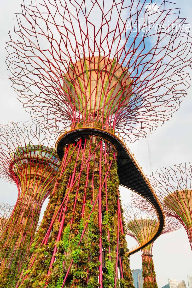 Супер деревья | Тропический парк, который поражает воображение - Сады у залива | Сказочная достопримечательность Сингапура - парк Gardens by the Bay | Эксперт по путешествиям AsiaPositive.com