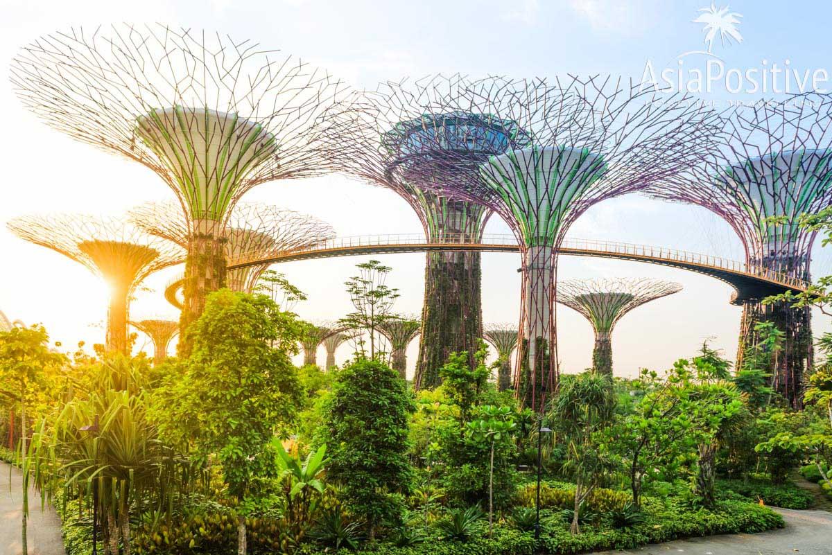 Современная достопримечательность Сингапура - Сады у Залива (Gardens by tha Bay) | Детальный маршрут для самостоятельного путешествия в  Сингапур и по самым интересным островам Индонезии (Бали, Ява, Гили Траванган) за 14 - 15 дней.  | Маршрут 4 острова: Сингапур, Ява, Гили, Бали | Эксперт по путешествиям AsiaPositive.com