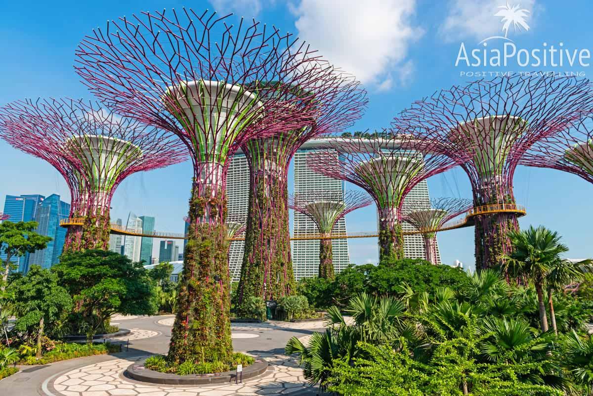 Парк Gardens by the Bay в Сингапуре | Детальный маршрут для самостоятельной поездки из Паттайи в Сингапур, по дороге посетив ещё две азиатских столицы - Куала Лумпур и Бангкок. | Эксперт по путешествиям AsiaPositive.com