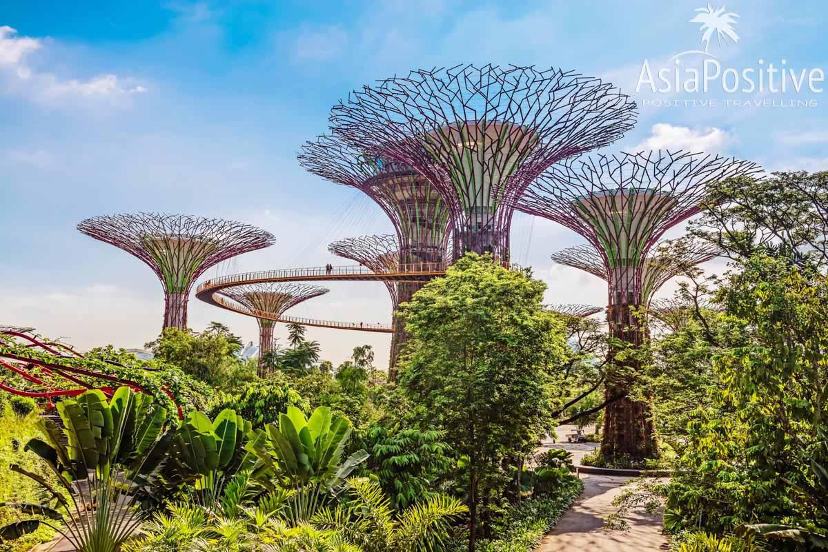 Сказочные сады - Gardens by the Bay   Экскурсии по Сингапуру с русскоговорящим гидом и не только   Путешествия по Азии с AsiaPositive.com