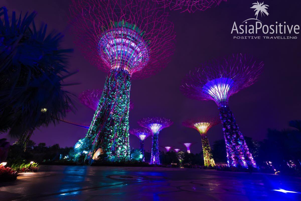Супер-деревья в парке Gardens by the Bay - одной из самых посещаемых достопримечательности Сингапура | Эксперт по путешествиям AsiaPositive.com