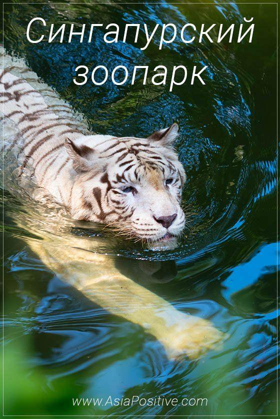 Самая необходимая информация о Сингапурском зоопарке: как быстрее и дешевле добраться, когда лучше приезжать, где выгоднее купить билеты, что стоит с собой взять, как увидеть всё самое интересное.| Сингапурский зоопарк: о чём стоит знать каждому туристу | Позитивные путешествия по Азии от AsiaPositive.com