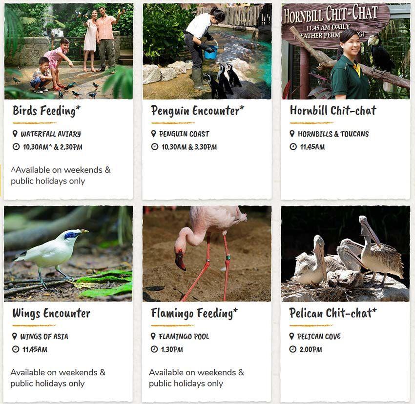 Расписание кормлений и шоу в парке птиц |Официальный сайт Сингапурских зоопарков (Ночное Сафари, Речное Сафари, Парк Птиц, Зоопарк) - это актуальные карты, расписание кормлений и шоу, часы работы зоопарков. | Источники информации о Сингапуре | Путешествие по Азии с AsiaPositive.com