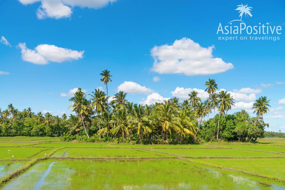 Живописные пейзажи возле озера Тиса | Детальный план - маршрут для самостоятельного путешествия по самым интересным достопримечательностям и самым красивым местам Шри-Ланки и пляжного отдыха на 2 недели (12-14 дней). | Путешествия по Азии AsiaPositive.com