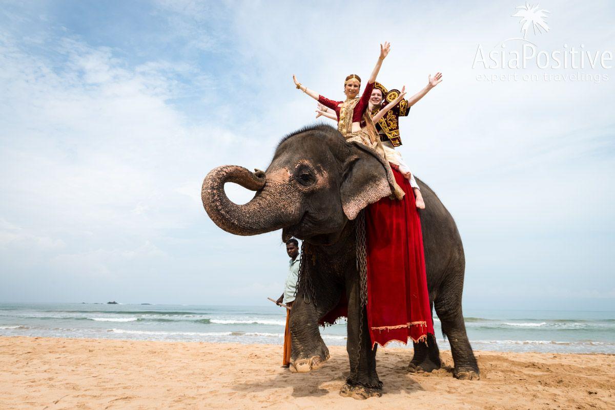 Свадебные фото на пляже на слоне - настоящая экзотика | Яркая свадьба на Шри-Ланке | Путешествия по Азии AsiaPositive.com