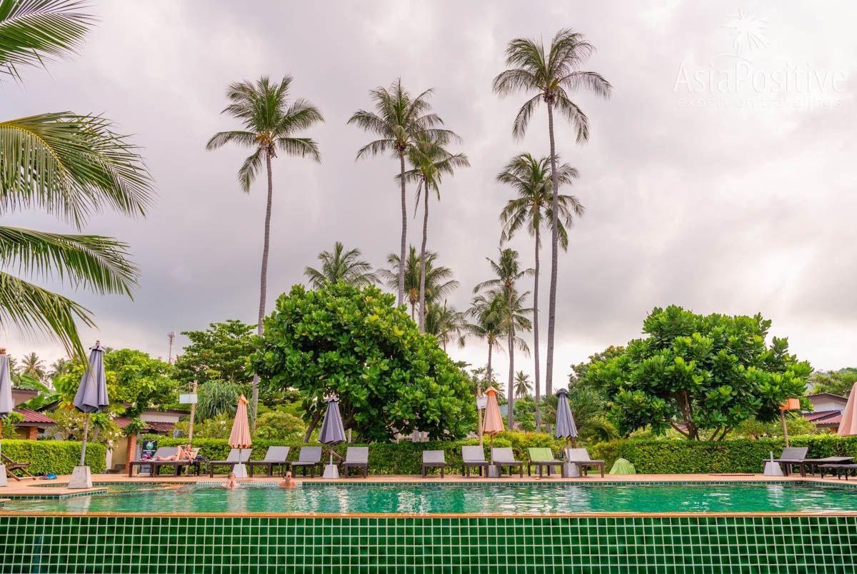 Упавший кокос может стать причиной травмы  | Опасные растения Таиланда, с которыми вы можете повстречаться | AsiaPositive.com