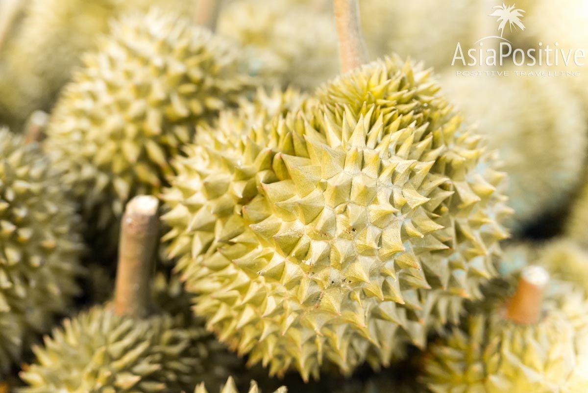 Дуриан - знаменитый фрукт с непередаваемым ароматом и вкусом | Путешествия с AsiaPositive.com