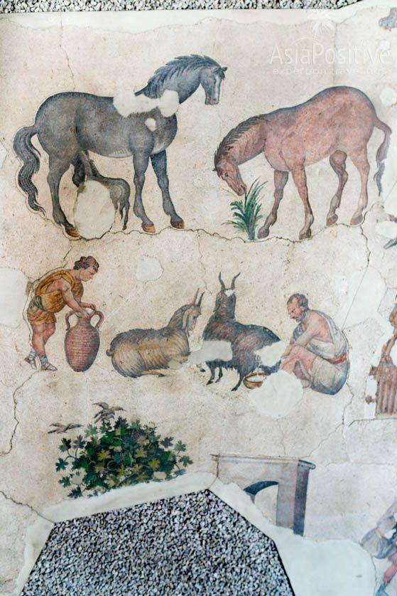 Mosaic with pets in the Grand Palace of Constantinople Mosaics Museum in Istanbul | Travel with AsiaPositive.com