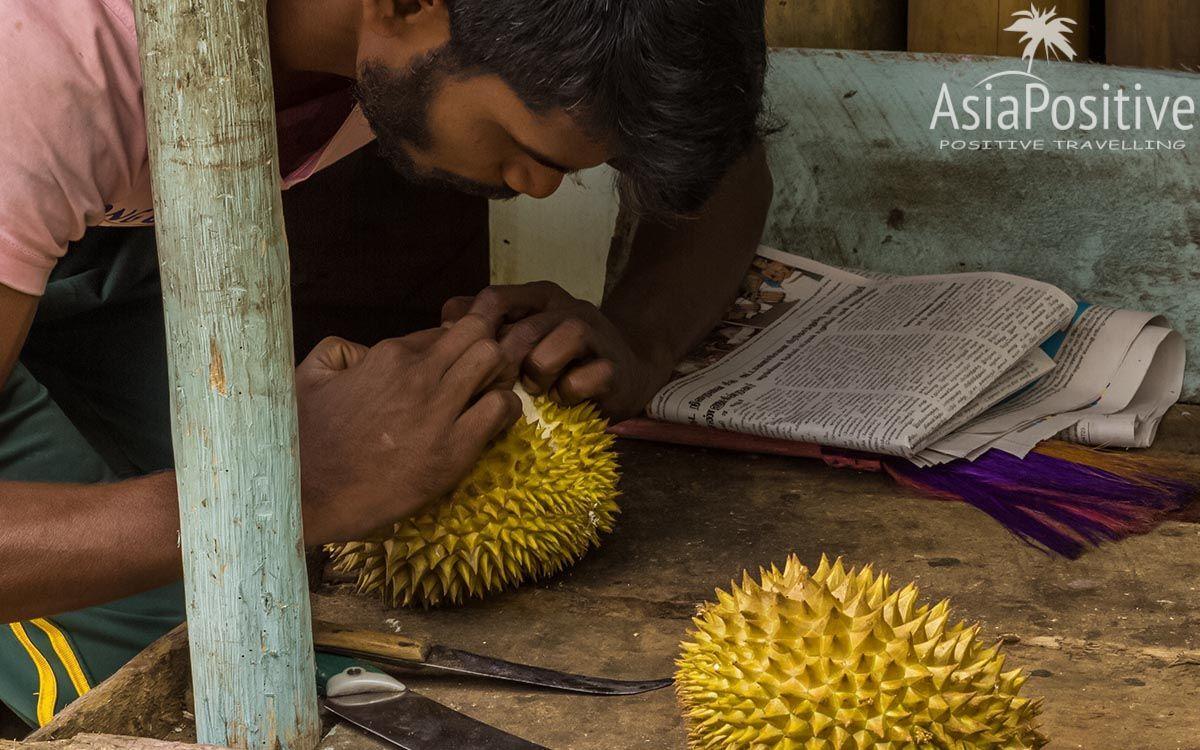 Почистить дуриан - нелёгкая задача   Король фруктов - Дуриан   Позитивные путешествия AsiaPositive.com