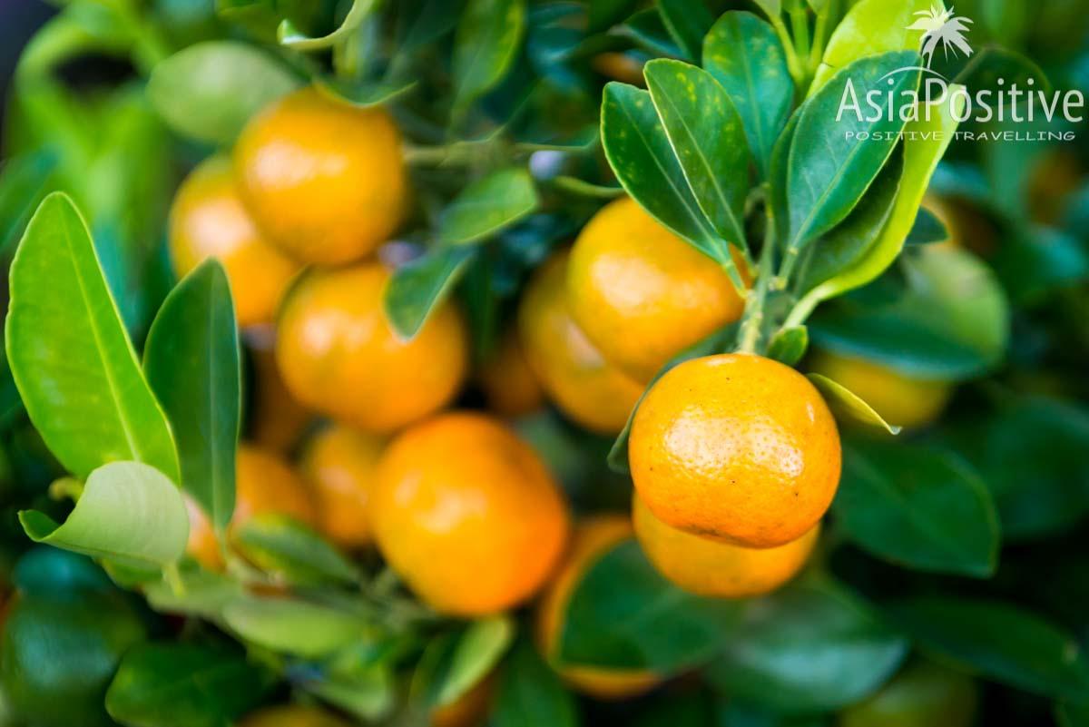 Мандариновые деревья новогодней ярмарке   Китайский Новый Год - как привлечь удачу и богатство   Позитивные путешествия AsiaPositive.com