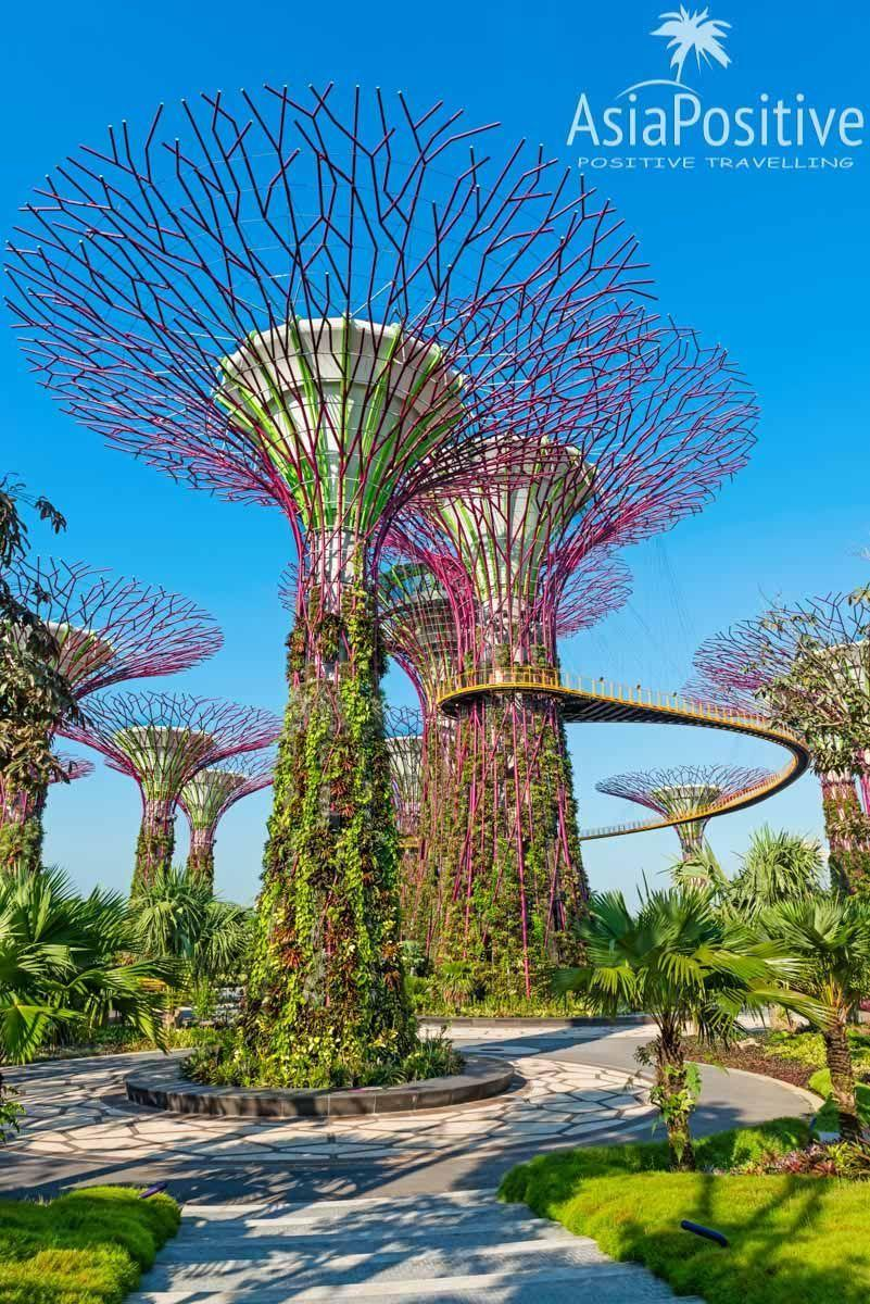 Впечатляющая достопримечательность Сингапура Gardens by the Bay (Сады у залива) | Лучшая книга об истории успеха Сингапура | Путешествия по Азии с AsiaPositive.com