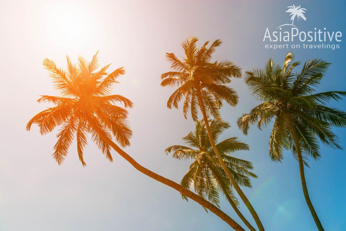 Захватите пару интересных книг для отдыха под пальмами   Шри-Ланка   Путешествия с AsiaPositive.com