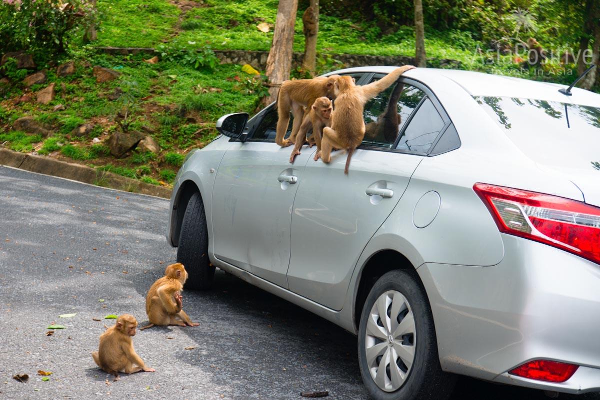 Никогда не оставляйте машину с открытыми окнами | Авто в аренду на Пхукете | Таиланд | Путешествия AsiaPositive.com