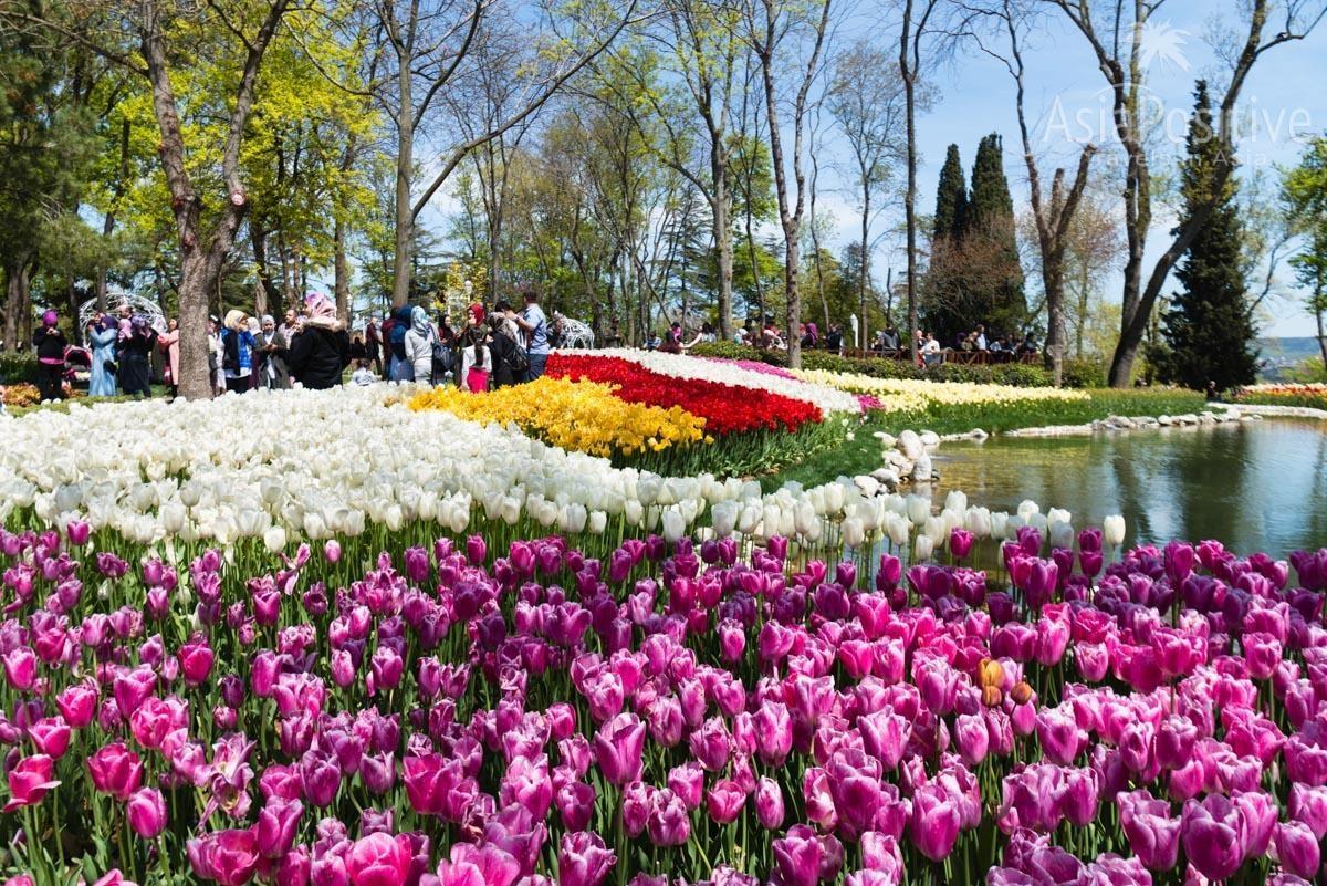 Тюльпаны в парк Эмирган в апреле | Стамбул, Турция | Путешествия AsiaPositive.com