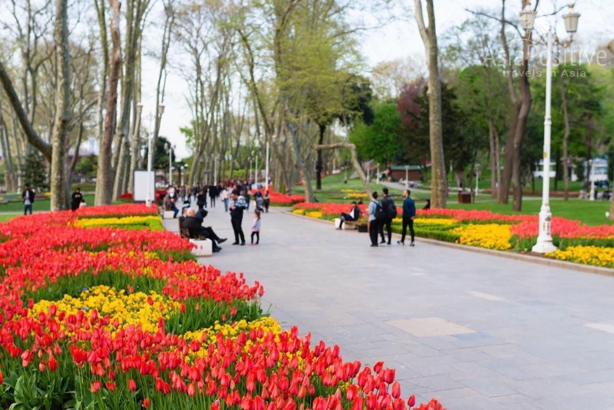 Тюльпаны в парке Гюльхане | Стамбул, Турция | Путешествия с AsiaPositive.com