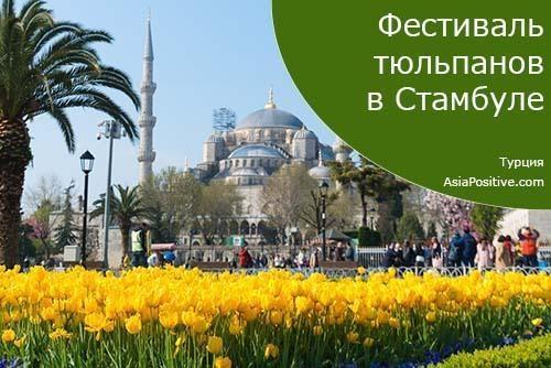 Тюльпаны в Стамбуле - когда и где проходит фестиваль тюльпанов